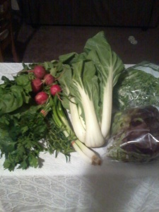 This is my half of the share, except that I took the whole bok choy for slow cooker purposes.