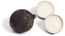 blackradish